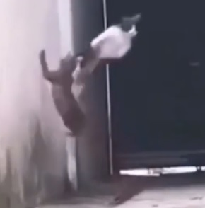 When Cats Get Wings