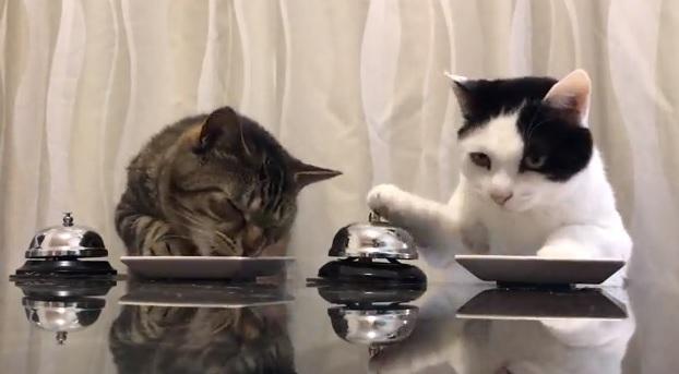 Meet Pavlov's Cats